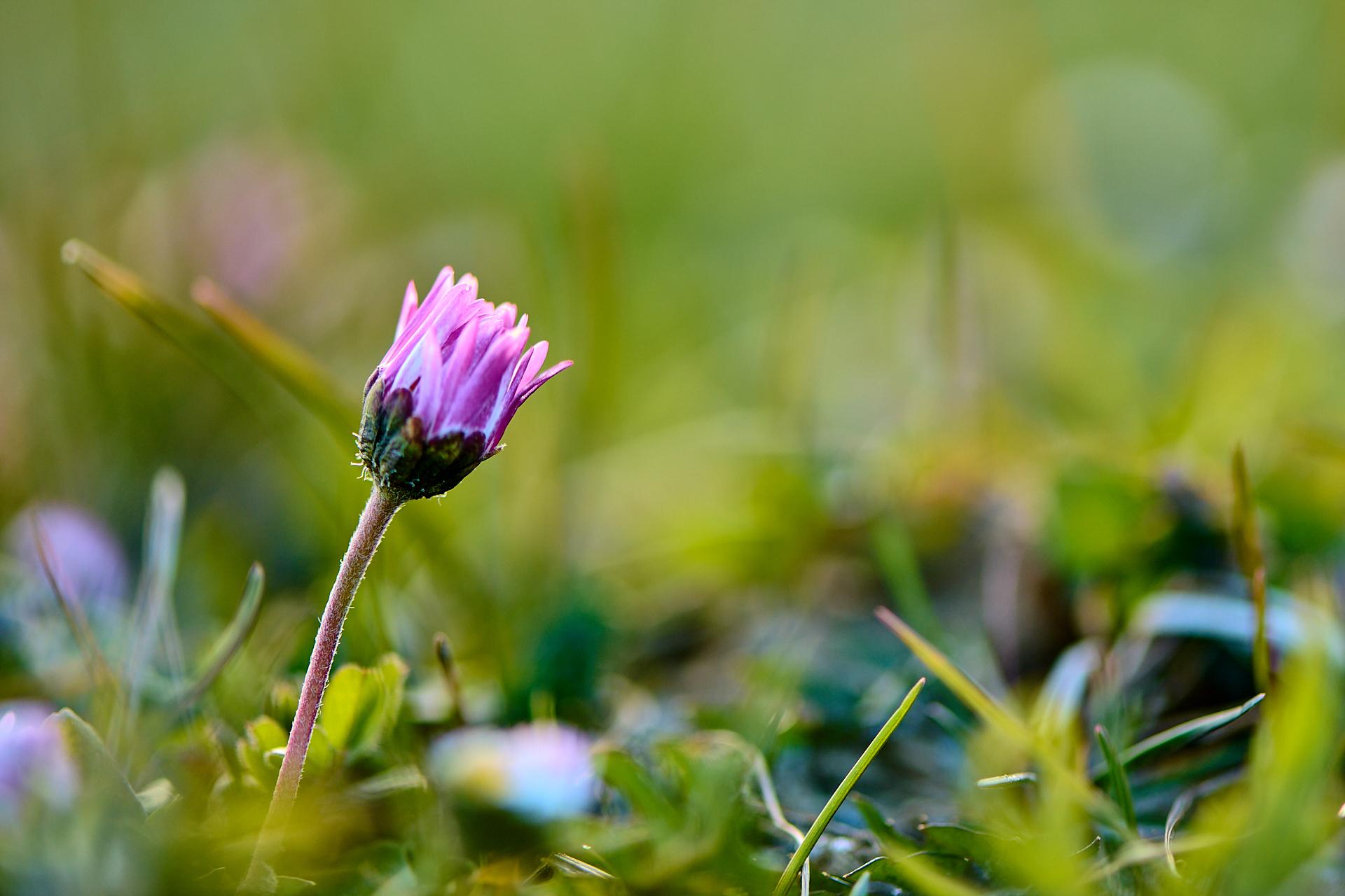 Fotoworkshop Frühlingsblumen